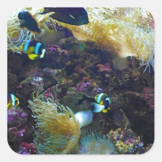 Tropisk fisk fyrkantigt klistermärke