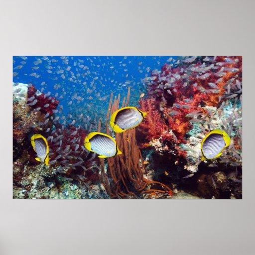 Tropisk fisk och koralltryck posters