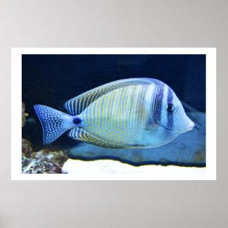 Tropisk fisk poster
