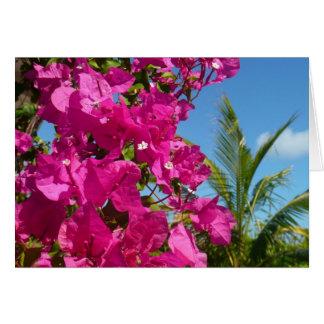 Tropisk naturplats för Bougainvillea och för Hälsningskort