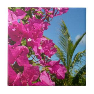 Tropisk naturplats för Bougainvillea och för Liten Kakelplatta