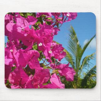 Tropisk naturplats för Bougainvillea och för Mus Mattor