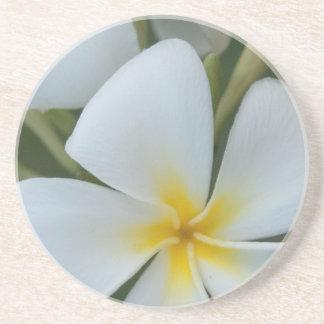Tropisk Plumeriablomma för vit från Fiji Underlägg Sandsten