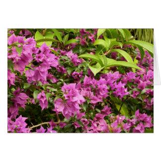 Tropisk purpurfärgad Bougainvillea Hälsningskort