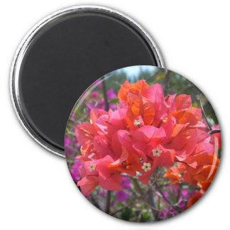 Tropisk rosa Bougainvillea Magnet Rund 5.7 Cm