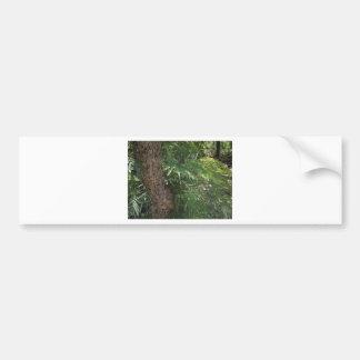 Tropisk skog bildekal