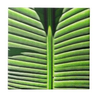 Tropisk struktur kakelplatta