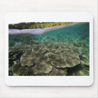 Tropiska den undervattens- korallreven beskådar musmatta