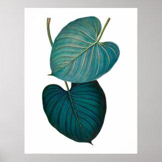 Tropiska exotiska philodendronlöv poster