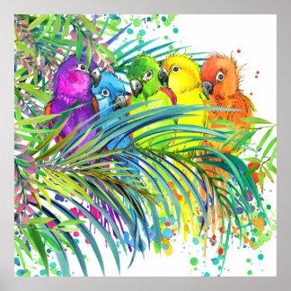 Tropiska fåglar/vetenskapslärareaffisch poster