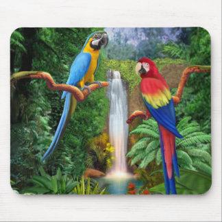 Tropiska papegojor för Macaw Musmatta