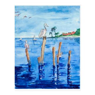 Tropiska pelikan vykort