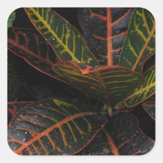 Tropiska växter fyrkantigt klistermärke
