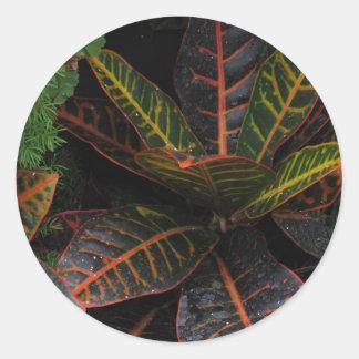 Tropiska växter runt klistermärke