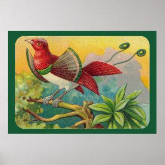 Tropiskt fågeltryck för vintage poster