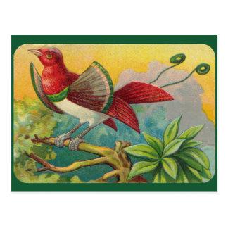 Tropiskt fågeltryck för vintage vykort