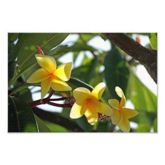 Tropiskt gult blommatryck fototryck