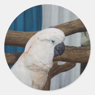 Trött kakadua runt klistermärke