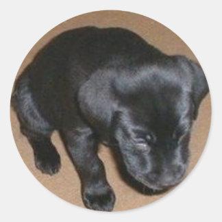 Trött Labrador valp Runt Klistermärke