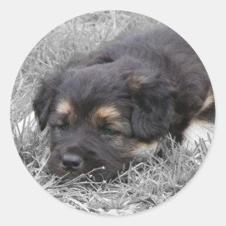 Tröttad hund, anpassade runt klistermärke