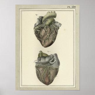Tryck 1831 för vintagehjärtaanatomi poster