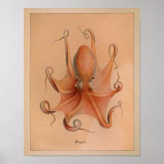 Tryck 1851 för vintagefärgbläckfisk poster