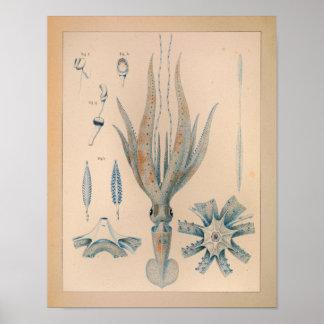 Tryck 1851 för vintagefärgtioarmad bläckfisk