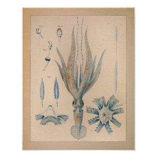 Tryck 1851 för vintagefärgtioarmad bläckfisk poster