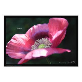 Tryck av den rosa orientaliska vallmon + Deva&Ange Fototryck