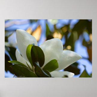 Tryck för affisch för Magnolia för målat glasshimm