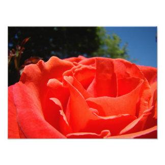 Tryck för konst för fotografi för röd rosblomma