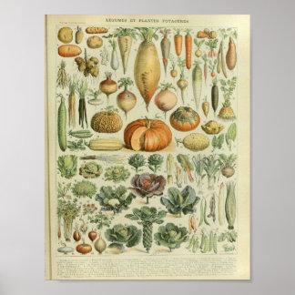 Tryck för konst för vintagefärggrönsak poster