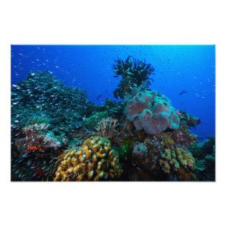 Tryck för korallhavsfoto