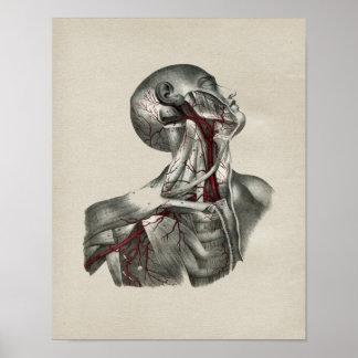 Tryck för vintage för människanackeanatomi poster