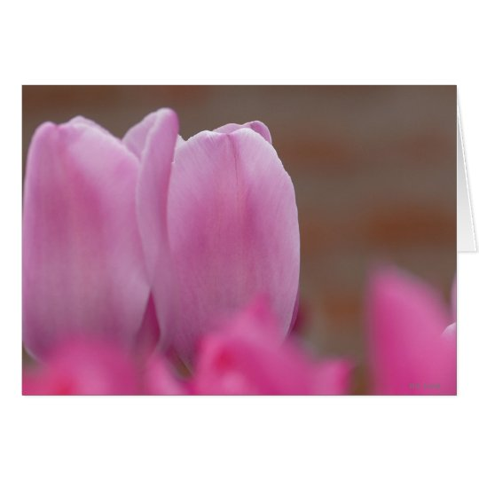 tulip hälsningskort