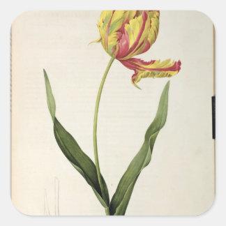 Tulipagesnerianadracontia, från 'Les Fyrkantigt Klistermärke