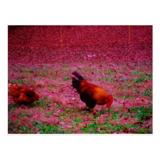 Tupp i det purpurfärgade gräset vykort