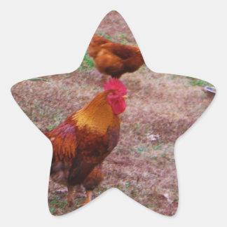 Tupp och hans hönor stjärnformat klistermärke