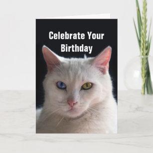 grattis på födelsedagen turkiska Angorakatt Kort | Zazzle.se grattis på födelsedagen turkiska