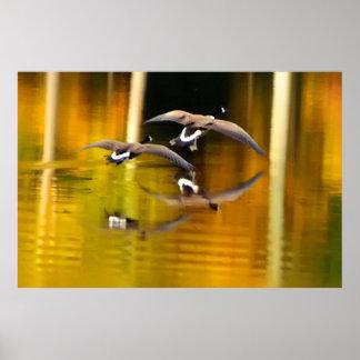 Två ankor som flyger över vatten poster