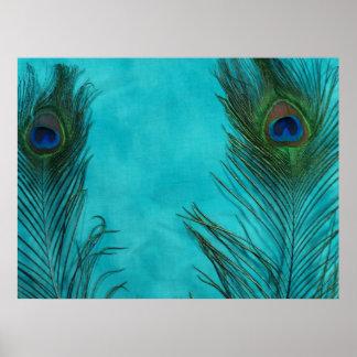 Två Aquapåfågelfjädrar Affischer