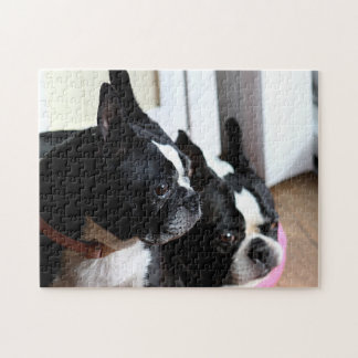 Två Boston terriers Pussel