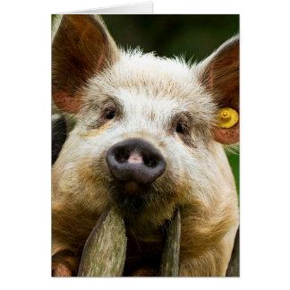 Två grisar - grislantgård - grislantgårdar OBS kort