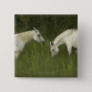 Två hästar som äter gräs standard kanpp fyrkantig 5.1 cm