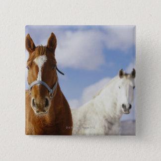 Två hästar standard kanpp fyrkantig 5.1 cm