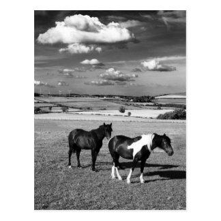 Två hästar vykort
