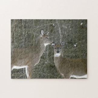 Två hjort, pussel för foto 11x14 med gåvan boxas