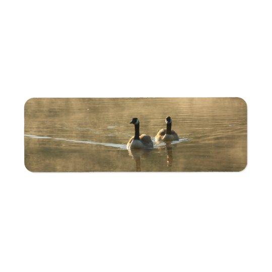 två Kanada gäss som simmar på floden vid soluppgån Returadress Etikett