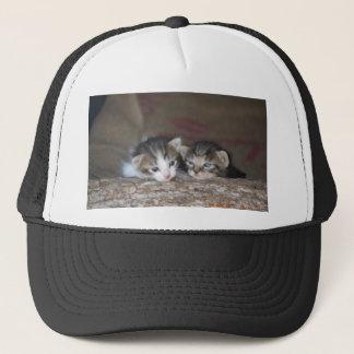 Två kattungar loggar på keps