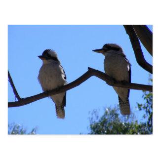 Två Kookaburras Vykort